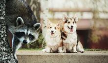 Топ-12 экзотических животных, которых можно содержать в квартире