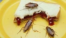 Тараканы и мыши - повод для выселения