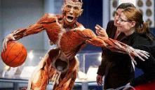Минторг признало рекламу выставки «Тайны тела» неэтичной