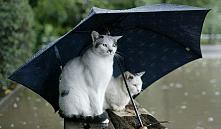 С 14 мая в Беларуси ожидаются дожди и похолодание