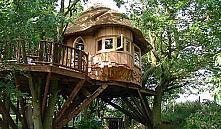 Стартаперы предлагают привлекать туристов в Беларусь домами на деревьях
