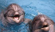 В Минске построят дельфинарий