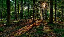 Витебская область: заблудившиеся в лесу девушки вышли на звук сирены