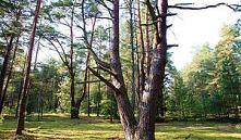 Туристам могут разрешить путешествовать по Беловежской пуще без визы