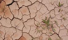 В Беларуси принят план по предотвращению деградации земель