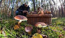 В лесу нашли труп грибника