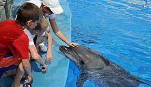 На территории Минского зоопарка открылся первый в Беларуси дельфинарий