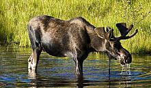 С 26 июня штрафы за браконьерство в Беларуси выросли в три раза