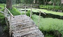 В Беларуси снова закрывают леса для посещения