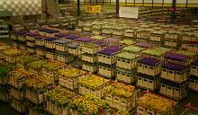 Зараженные растения поставляются в Россию через белорусскую границу