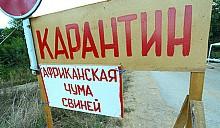 Африканская чума до самых до окраин: листовки на белорусских заборах возвестили о принудительном убое свиней в Светлогорском районе