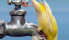 Все, что вы хотели знать об отключении горячей воды