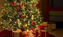 Лесхозы Минской области открыли продажу новогодних елей и сосен