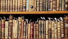Книжные завалы помешали выселению
