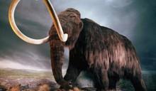 В Якутии создадут криохранилище для мамонтов
