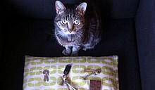 Кошка украла ключи от 26 домов с помощью своего ошейника