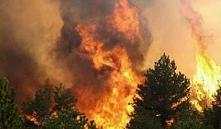Хойникский район: пожар ликвидирован, радиационный фон не изменился