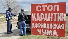 Украина отказалась ввозить свинину из Беларуси: убийственное шествие африканской чумы