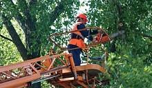 Ни одно дерево не пересадят без ведома жильцов