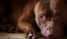 В Гродно хозяин собаки избил мужчину, сделавшего ему замечание