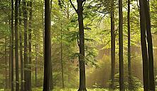 Районы Гомельской области начали снимать запрет на посещение лесов