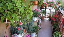Владельцы самых красивых гомельских балконов получат премии