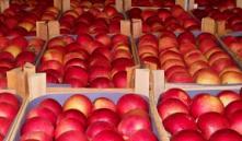 Польша и Беларусь создадут СП по переработке продовольственного сырья