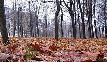 В парках Минска перестанут убирать опавшую листву