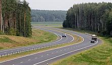 Президент Беларуси поручил посадить сосны вдоль дорог