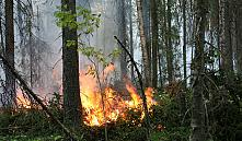 Александр Лукашенко провел совещание по обеспечению пожарной безопасности