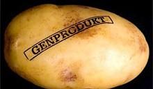 В Беларуси собираются производить трансгенный картофель