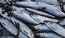 Рыбный апокалипсис сменяет африканскую чуму: в Беларуси зафиксирован мор рыбы