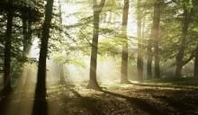 Белорусский лес будет поставляться в Россию