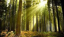 С 8-ми районов сняли запрет на посещение лесов